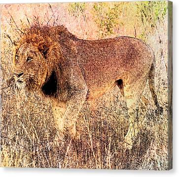 The King Canvas Print by Ericamaxine Price