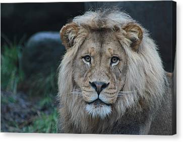 Canvas Print featuring the photograph The King by Laddie Halupa