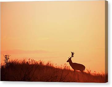 The King Of The Hill Canvas Print by Roeselien Raimond