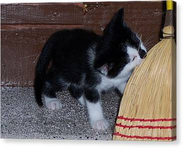 The Kitten And The Broom Canvas Print