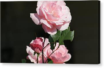 The Lady In Pink Canvas Print by Maria  Wall