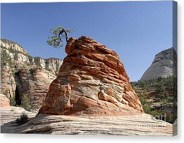 The Land Of Zion Canvas Print by David Lee Thompson