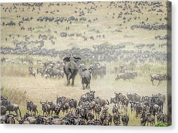 Gnu Canvas Print - The Last Charge by Jeffrey C. Sink
