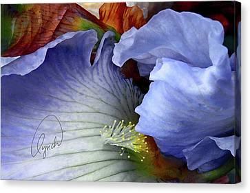 The Last Iris Canvas Print