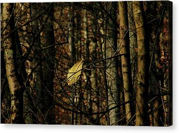 The Last Leaf Canvas Print by Bruce Patrick Smith