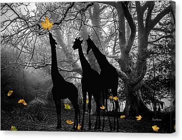 Woods Canvas Print - The Last Leaf by Ericamaxine Price