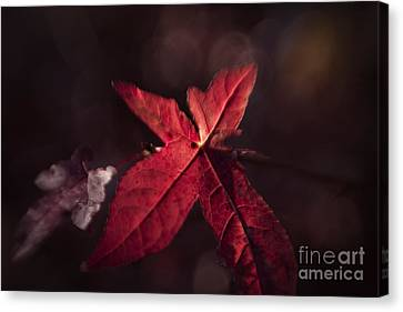 The Last Canvas Print by Lisa McStamp
