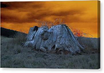 The Last Of The Giant Eucalyptus Viminalis In Wilmot Tasmania Canvas Print by Sarah King