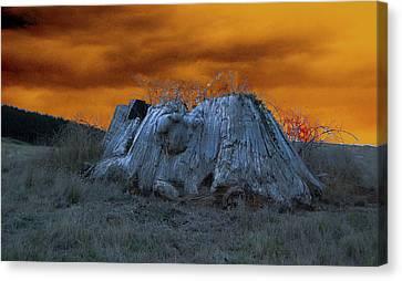 The Last Of The Giant Eucalyptus Viminalis In Wilmot Tasmania Canvas Print by Sarah  King