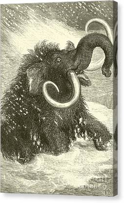 Stormy Weather Canvas Print - The Last Of The Mammoths by English School