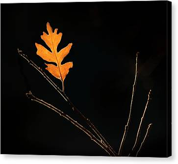 The Last To Fall Canvas Print