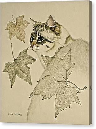 the Leaf Cat Canvas Print by Tim Ernst