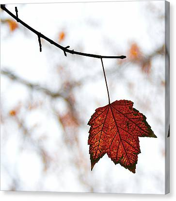 The Leaf Canvas Print by Humboldt Street