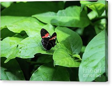 The Leaf Is My Plate Canvas Print