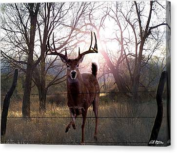 The Leap Canvas Print by Bill Stephens