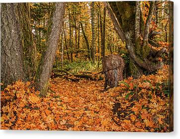 The Leaves Have Fallen Canvas Print