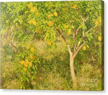The Lemon Tree Canvas Print by Henry Scott Tuke