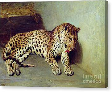 The Leopard Canvas Print by John Sargent Noble