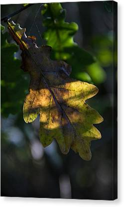 Canvas Print featuring the photograph The Light Fell Softly by Odd Jeppesen