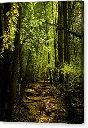 The Light In The Forest Canvas Print by TL Mair