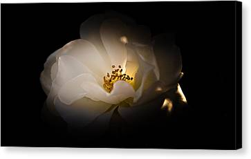 The Light Of Life Canvas Print by Loriental Photography