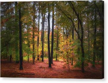 The Lighted Woods Canvas Print by James Barber