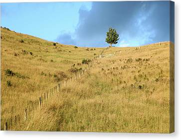 Canvas Print featuring the photograph The Lines The Tree And The Hill by Yoel Koskas