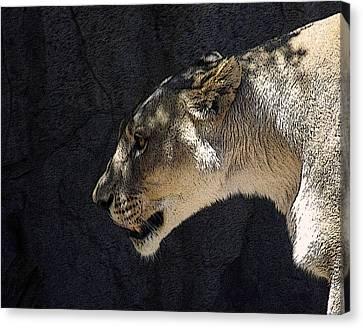 Lioness Canvas Print - The Lioness by Ernie Echols