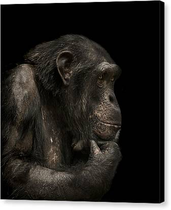 Primate Canvas Print - The Listener by Paul Neville