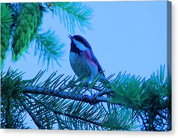 The Little Bird Sings Canvas Print