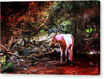 The Little Pink Unicorn By Pedro Cardona Canvas Print by Pedro Cardona Llambias