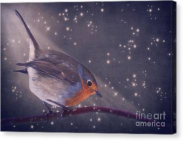 The Little Robin At The Night Canvas Print by Angela Doelling AD DESIGN Photo and PhotoArt