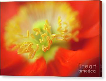 The Little Things Canvas Print by Ronald Hoggard