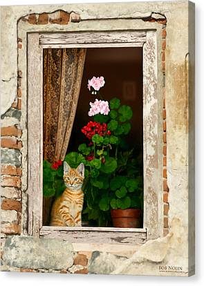 Window Canvas Print - The Little Tuscan Tiger by Bob Nolin