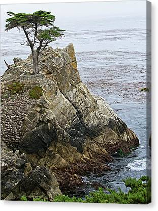 The Lone Cypress - California Canvas Print by Brendan Reals