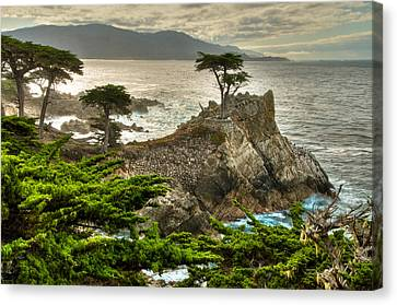 Hdr Look Canvas Print - The Lone Cypress Carmel California by Connie Cooper-Edwards