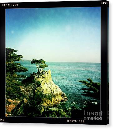 The Lone Cypress Canvas Print by Nina Prommer