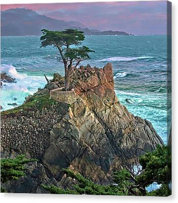 The Lone Cypress Canvas Print by Suzanne Stout