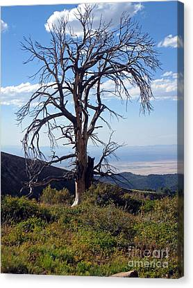 Canvas Print featuring the photograph The Lone Tree by Juls Adams
