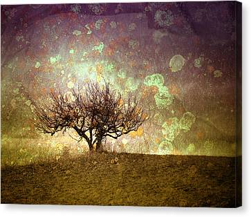 The Lone Tree Canvas Print by Tara Turner