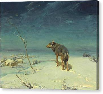 The Lone Wolf Canvas Print by Alfred Kowalski