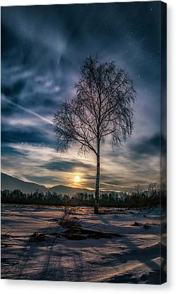 The Lonely Birch Canvas Print
