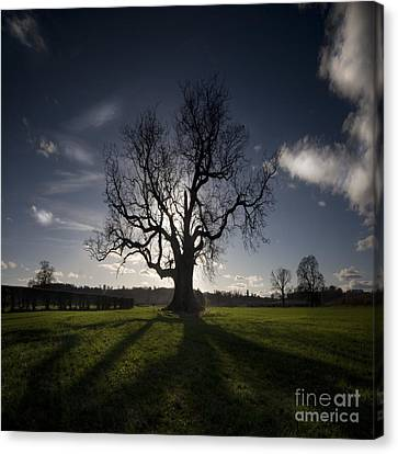 The Lonely Tree Canvas Print by Angel  Tarantella