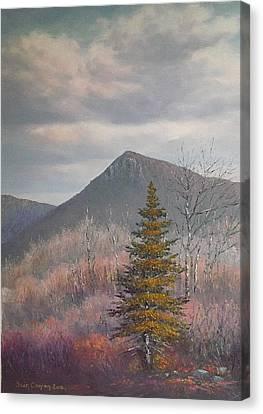 The Lonesome Pine Canvas Print by Sean Conlon