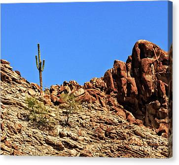 The Lonesome Saguaro Canvas Print by Robert Bales