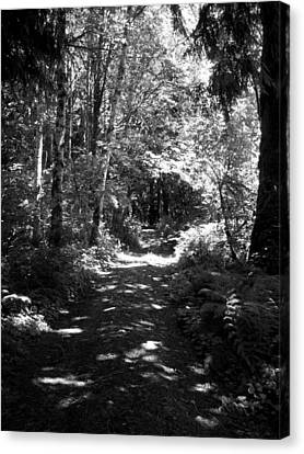 The Long And Winding Road  Bw Canvas Print by Ken Day