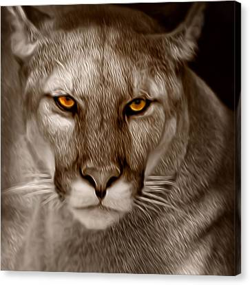 The Look - Florida Panther Canvas Print by Mitch Spence