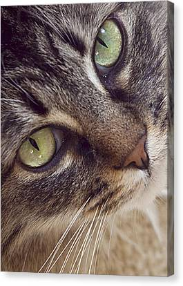The Look Of Love Canvas Print by Lynn Andrews