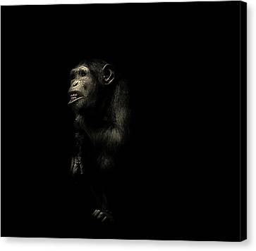 The Look Says It All Canvas Print by Martin Newman