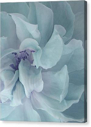 The Loving Rose Canvas Print by The Art Of Marilyn Ridoutt-Greene
